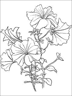 coloring page fir petunia | Petunia coloring and printable page for anyone who loves flowers ...