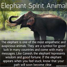 The elephant spirit animal or totem Elephant Spirit Animal, Elephant Quotes, Elephant Facts, Elephant Love, Quotes About Elephants, Elephants Photos, Animal Meanings, Animal Symbolism, Elephant Symbolism