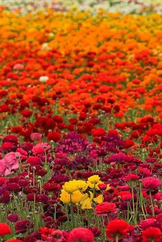 So much color, a feast for the eyes!