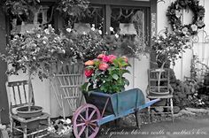 The Flower Shop  Elizabeth Lima