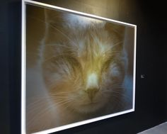 """Loser Cat"" - Niam Mawornkanong - S.A.C. Subhashok The Arts Centre."