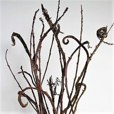 Fantail Pussy Willow | Florabundance Wholesale Flowers Brown Flowers, Colorful Flowers, Branches, Greenery, Wedding Flowers, Floral Design, Plants, Floral Patterns, Plant
