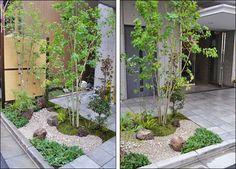 アオダモとコハウチワカエデが迎える坪庭 Japanese Garden Design, Japanese Landscape, Japanese Gardens, Japan Garden, Japan Fashion, Garden Styles, Garden Plants, Landscape Design, Scenery