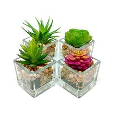Artificial Succulent Planters Small Glass Cube Assorted Faux Plants Home Decor