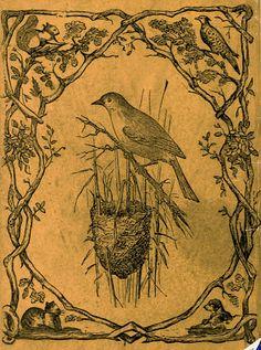 Bird & Nest Engraving