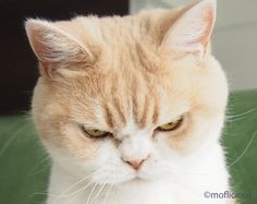 Seriously! You really forgot to buy my favourite cat treats. Not good enough!