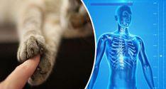 A macskák közelsége miatt számos betegségtől megszabadulhatsz!