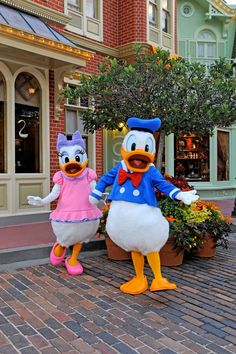 Walt Disney World - Magic Kingdom Donald and Daisy - R.A. really wants to see Donald this time! :) #streetmagic