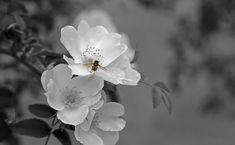Nello spettro luminoso, il colore bianco comprende tutti gli altri. Si trova all'esatto opposto del colore nero per quanto riguarda il significato. Il bianco è il colore della luce, della creazione. Rappresenta la purezza e il giorno. E' il principio stesso della vita. Per la maggior parte delle tradizioni nel mondo il bianco è un …