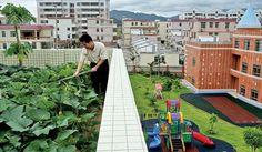 roof vegetable garden