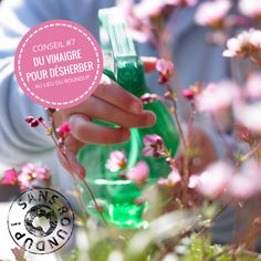 Un printemps sans pesticide 10 conseils naturels les - Desherbant total le plus efficace ...