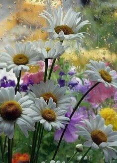 Lovely bouquet nice mixture of types and colors! Happy Flowers, Pretty Flowers, Wild Flowers, Rain Flowers, Nice Flower, Flowers Garden, Daisy Love, Daisy Girl, Arte Floral