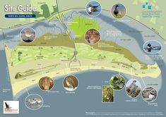 North Bull Island Site Guide | Walk | Nature | Dublin Stuff To Do, Things To Do, Dublin City, City Council, Paint Designs, Bird Watching, Park City, Island, Nature