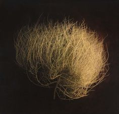 Long ago in my art column, I wrote about Kate Breakey's toned still-life photographs, and the small death of a single lemon peel on a wrinkled tablecloth. These tumbleweed photographs are lif… Yamamoto, Land Of Enchantment, Foto Art, Color Of Life, Photographic Prints, Installation Art, Fine Art Photography, Abstract Photography, Drawing