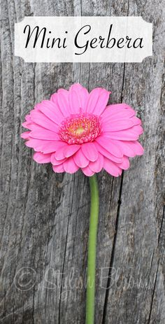 Mini Gerbera Daisy comes in many colors and cost about as much as a rose.  Looks good in clusters in vases.