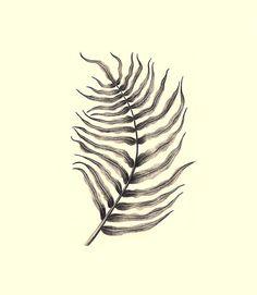 Fern Blechnum Orientale Print Illustration Pencil Drawing Woodland Home Decor Forest Wall Art Handmade Black Gray Ocher