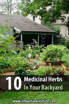 If you look, you could find medicine in your backyard. Practice identifying them now because there may come a time when you need them. Herbal Remedies, Home Remedies, Natural Remedies, Urban Survival, Homestead Survival, Camping Survival, Survival Tips, Survival Skills, Natural Medicine