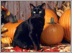 4 Autumn Halloween Black Cat Kitten Cats Kittens Greeting Notecards/ Envelopes…