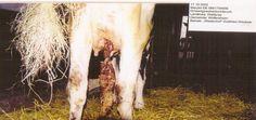 Cette étude révèle une fois de plus l'urgente nécessité d'un étiquetage spécifique de la nature et quantité des OGM, notamment dans l'alimentation. Des tests à long terme des OGM alimentaires doivent être effectués et rendus publics, tout comme pour les pesticides qu'ils sont conçus pour contenir. Tout cela devient plus que jamais indispensable... http://www.criigen.org/communique/98/display/Le-premier-OGM-Bt-commercialise-etait-toxique-a-long-terme-pour-les-animaux?lang=fr