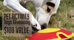 Win $100 Worth Of Pet Toys!
