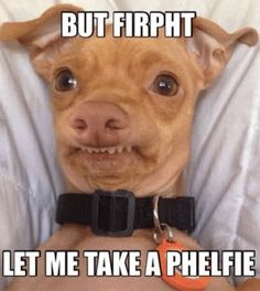 Super Funny Pictures, Funny Animal Pictures, Funny Animals, Cute Animals, Funny Dog Captions, Funny Dogs, Weird Dogs, Funny Puppies, Funny Humor