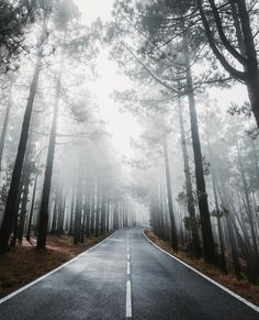 Beautiful Roads, Beautiful Places, The Longest Journey, Forest Road, Winding Road, Inca, Travel Humor, Scenery, Country Roads