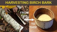 My first ever birch bark basket! All the bark was harvested/sourced from from dead trees laying around! We choose to only harvest birch ba. Tree Bark Crafts, Birch Bark Crafts, Wood Crafts, Wood Projects For Kids, Diy Craft Projects, Archaeology For Kids, Birch Bark Baskets, Nature Crafts, Craft Materials
