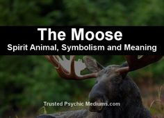 What does the moose spirit animal really mean? Find out the true meaning and symbolism of the moose in this special spirit animal analysis. Nature Meaning, Spiritual Meaning, Spiritual Symbols, Wicca Witchcraft, Magick, Animal Meanings, Spiritual Animal, Fox Spirit, Spiritual Prayers