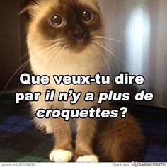 Animaux Funny True Quotes, Funny Facts, Funny Jokes, Maine Coon, Cool Cats, Funny Images, Funny Pictures, Funny Cute, Funny Animals