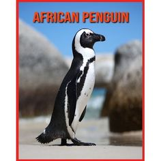 African Penguin: Fascinating African Penguin Facts for Kids with Stunning Pictures! (Paperback)