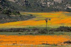 The great Cape flower safari
