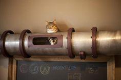 Steampunk Shelf - Cat Hideaway Tunnel