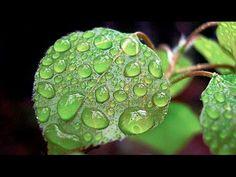 Czym pachnie deszcz ? - Nauka. To lubię. - YouTube