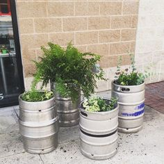 We re-purposed beer kegs into planters for outside of our office! Come and see our new website at bakedcomfortfood.com!