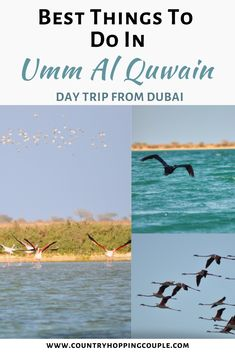 This is one of the off beat destination in UAE, and a great option for a day trip from Dubai. Umm Al Quwain is blessed with a beautiful coastline, and plenty of activities to do. | Umm Al Quwain Things To Do | Day Trip From Dubai | Dubai Day Trips | Umm Al Quwain Travel Guide #ummalquwain #daytripfrom Dubai #birdwatching #photography #uaetravel Dubai Travel, Asia Travel, Eastern Travel, Travel Abroad, Travel Couple, Family Travel, The Sound Of Waves, Travel Guides, Travel Tips