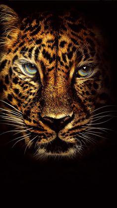 phone wallpaper cat Free Jaguar in Jumanji Welcome to the Jungle phone wallpaper by Cat Phone Wallpaper, Jaguar Wallpaper, Wild Animal Wallpaper, Beast Wallpaper, Fairy Wallpaper, Tiger Wallpaper, Leopard Wallpaper, 8k Wallpaper, Lion Images