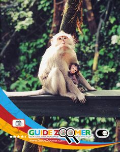 The island life of Bali, Indonesia. We go, where you go! @ www.guidezoomer.com  #animals #life #lifequotes #mother #nurture #baby #beauty #nature #bali #indonesia #monkeys #monkeyisland #jungle #islandlife #island #photography #dreamcatcher #tourguide #trip #plan #hotels #resorts #dining #restaurants #travel #vacation #planning #asia #animalkingdom #eastasia
