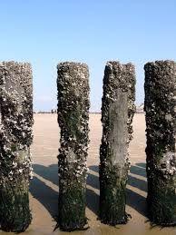 strand zeeland - Google zoeken