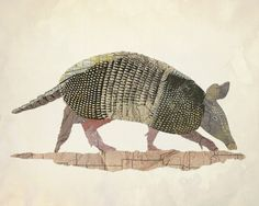 Texas Nine Banded Armadillo. Cartography Shaped to make Map Animals. See more art and information about Jason LaFerrera, Press the Image.