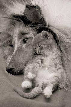black-white-wild-animal-photography-great-tips_large.jpg (500×750)