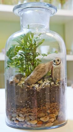 With the right ingredients, you can make a terrarium that remains fresh long after you've closed the lid on the scene. See our step-by-step instructions: http://www.midwestliving.com/garden/container/how-to-make-a-twig-terrarium/