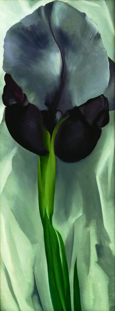 Georgia O'Keeffe ~ Dark Iris No. 1, 1927. Oil on canvas. Anonymous gift, FA1954.4 © Georgia O'Keeffe Foundation