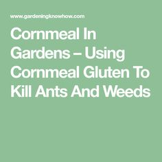 Cornmeal In Gardens – Using Cornmeal Gluten To Kill Ants And Weeds