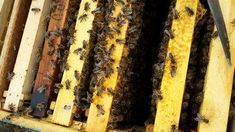 leectii apicultura Beekeeping, Desserts, Food, Tailgate Desserts, Dessert, Postres, Deserts, Meals