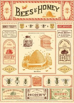 Art Prints, Honey Wrap, Honey Bee Hives, Honey Bees, Pattern Texture, Honey Label, Etiquette Vintage, Vintage Bee, Art Deco Posters