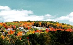 Ellicottville, New York. Western NY fall leaves. The bright reds and oranges of autumn.