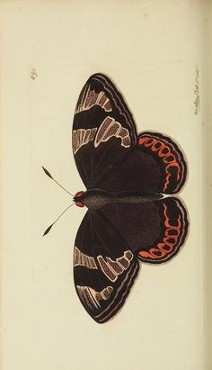- The naturalist's miscellany, or Coloured figures of natural objects - Biodiversity Heritage Library Illustration Botanique, Butterfly Illustration, Nature Illustration, Botanical Illustration, Vintage Butterfly, Butterfly Art, Butterfly Template, Butterfly Dragon, Monarch Butterfly