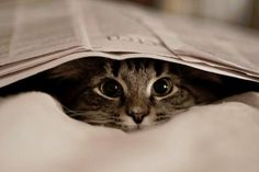 I love the big eyes! Use to play hide and seek with my cat and the newspaper. <3