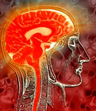 brain, science of the brain, neuroscience
