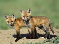 Wild Animals - Bing Images